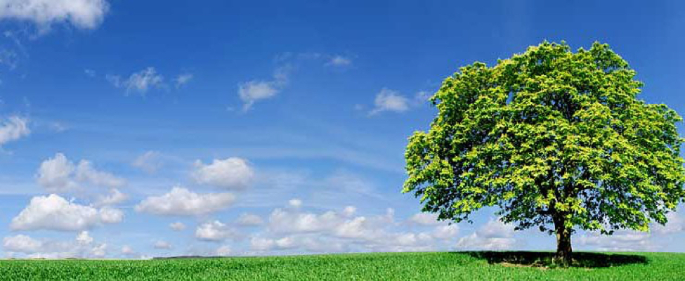 Envioronmental compliance- landscape of green tree and blue sky